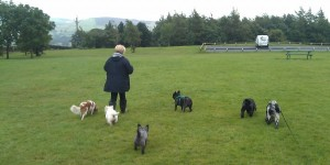 Minka, Isla, Queg, Henri, Molly and Finley
