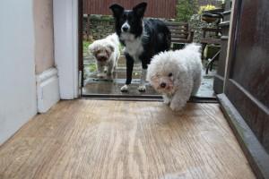 Benji, Masie and Izzy